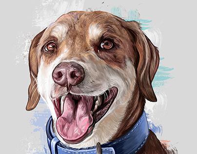 Pet Portraits V4