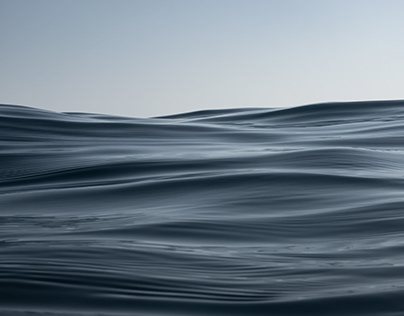 Pure Waves | Gray Whale