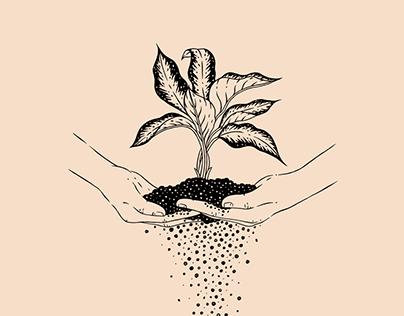 17 plantas
