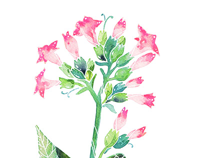 Watercolor plants series