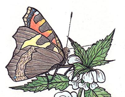 Flowers & Butterflies (in Denmark) - a colouring book