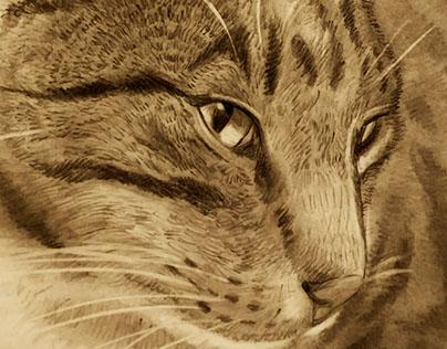 Pet Portrait Drawings by Ty