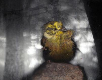 SCAMERA  Bird in a box   2010