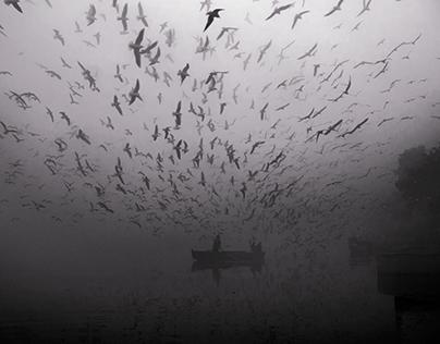 Birds Storm