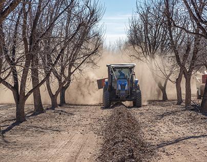 New Mexico Pecan Farming Day 2
