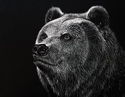 Scientific Illustration - Bear