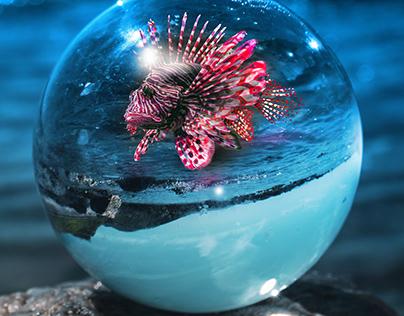 Lionfish in a Cyrstal Ball