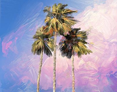 Palm Sunset Studies