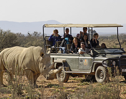 The Ultimate South African Safari Tour