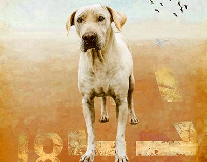 Portrait dog