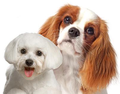 Cozy Bones For Dogs