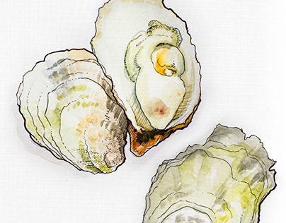 Oysters for Whalebone