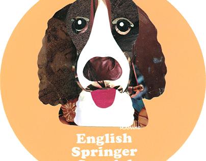 009 | English Springer Spaniel
