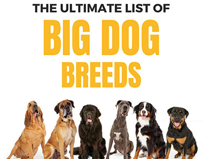 Massive list of over 50 Large Dog Breeds for 2018