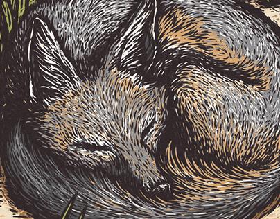 Sleeping Swift Fox