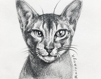 Illustration 11 | Kitty meow