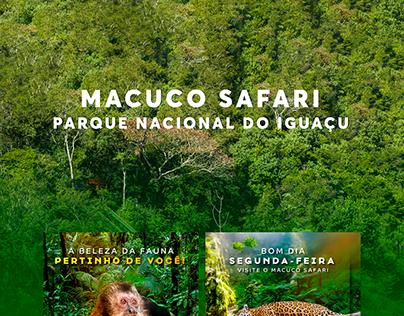 Macuco Safari - Social Media