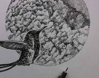 Drawings - Dibujos