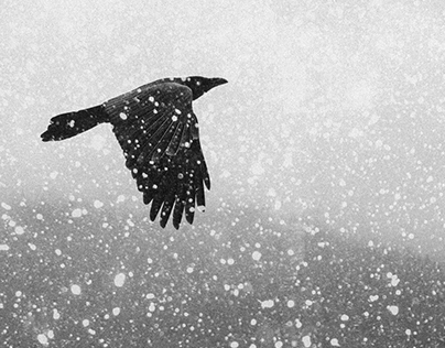 Ravens Dream