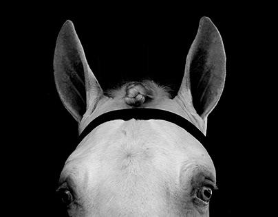 Equus Mundi (photography)