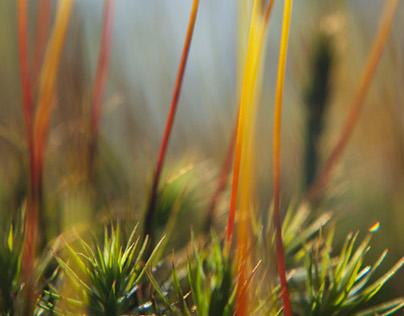 Moss stems