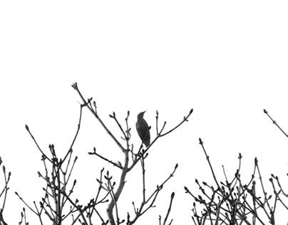 Photographies oiseaux