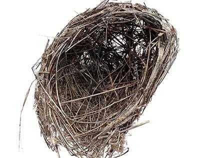 Latest empty nest drawing