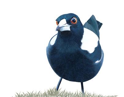 'Curious Magpie'