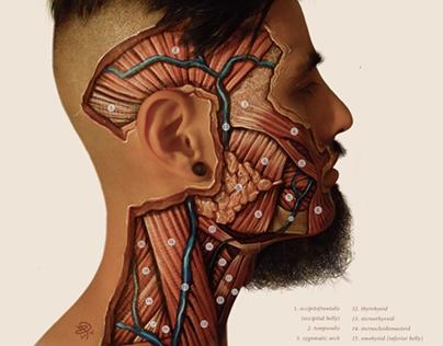 An Assortment of Anatomy