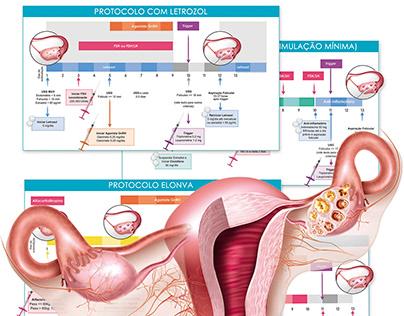 Ilustrações sobre Fertilidade