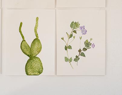 Portrete botanice/ Botanical portraits Diploma project