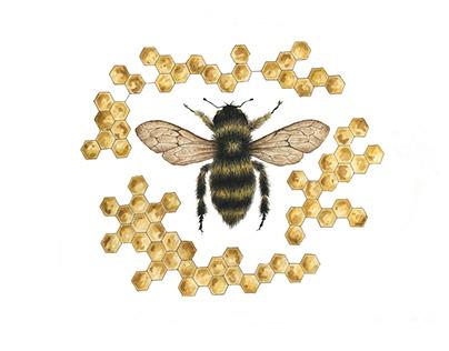 Honeybee in Honeycomb
