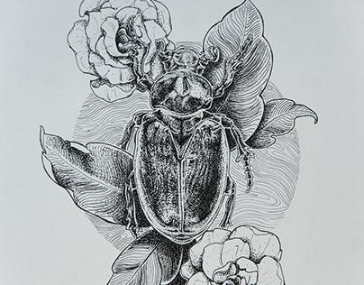 Beetle Series