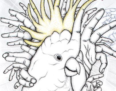 King Cocatoe