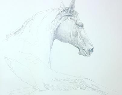skice / sketches