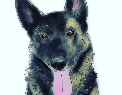 Mazel na zeď / Pets on wall