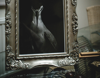 Wunderkammer - final images   Taxidermy