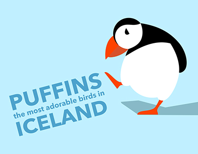 puffin_infographic