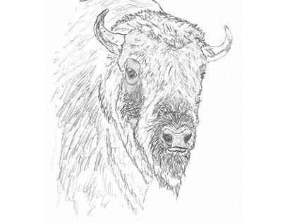 Pete the Buffalo