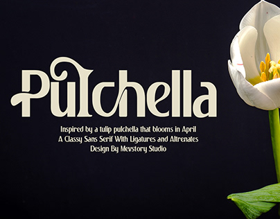 FREE   Pulchella Modern & Elegant Sans Serif Font