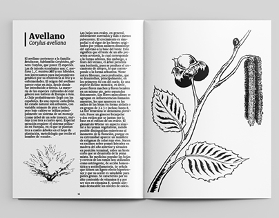 [Ilustración] Ilustración botánica