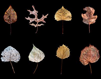 Wabi-Sabi (Leaves)
