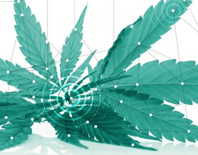 Rubicon CBD - Cannabis Blockchain - Brochure