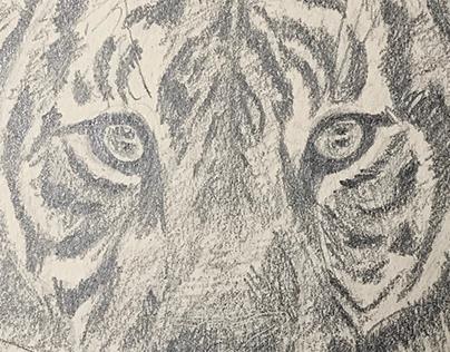 January 2019 Pencil Drawings