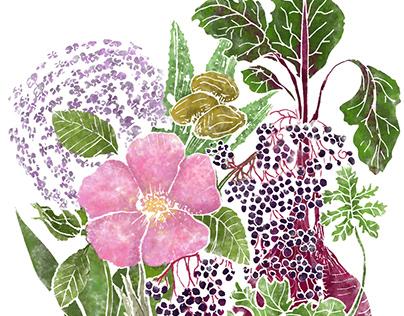 Plant Encyclopedia Illustration