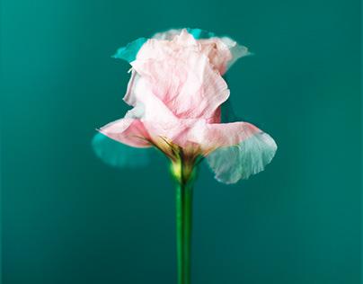 Dis-moi la Fleur?