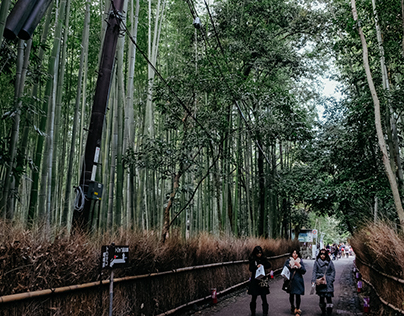 "| Travel #Walk in Kansai ""Arashiyama"""