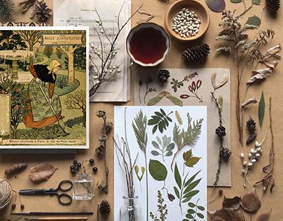 Calendar: Seasons and months
