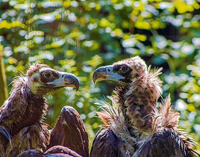 Vultures, part one: A nice conversation