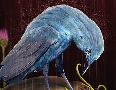 'Bikja' Blue Rock Thrush